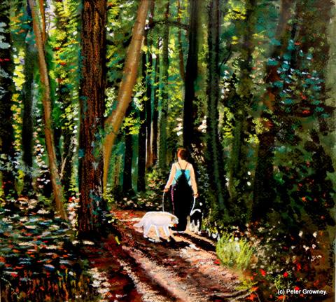 a-walk-in-delgany-woods