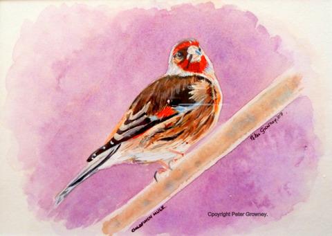 goldfinch-mule1