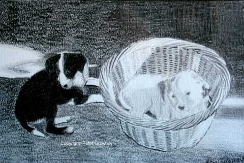 pencil-drawing-of-patch-and-snowie